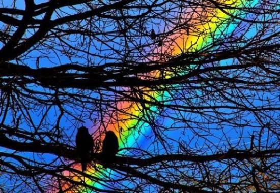 Новая концертная программа «Над радугой»